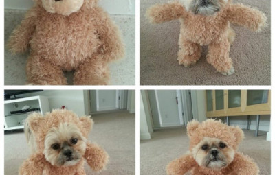 Teddy Bear Dog Costume - Geek Decor